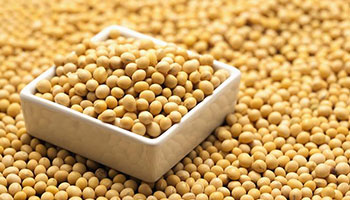Plant protein soybean peptide
